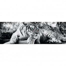 Bild Tigerblick I, Reinders