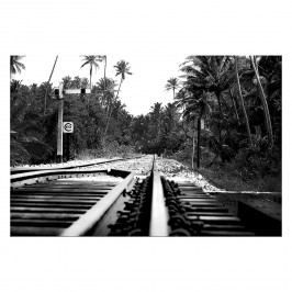 Bild Jungletrain - Leinwand - Schwarz / Weiß, Wandbilder XXL