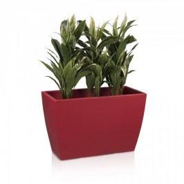 Pflanztrog ARTESA 50 Raumteiler Blumentrog Pflanzkübel Pflanzbehälter, Maße: 80x40x50 cm (L/B/H), Farbe: rot matt