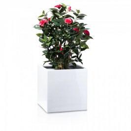 Blumenkübel Fiberglas weiß hochglanz CUBO 40. Pflanztopf in hochwertiger Verarbeitung. Abmessungen: 40/40/40 cm (L/B/H)